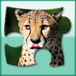 Bright puzzles: Wild Animals